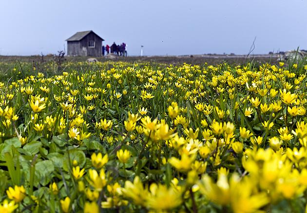 gannarveviken-frojel_1_2015-04-25_pehr-thermaenius